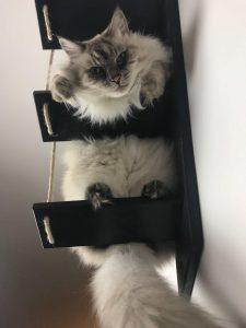 mensole per gatti :)