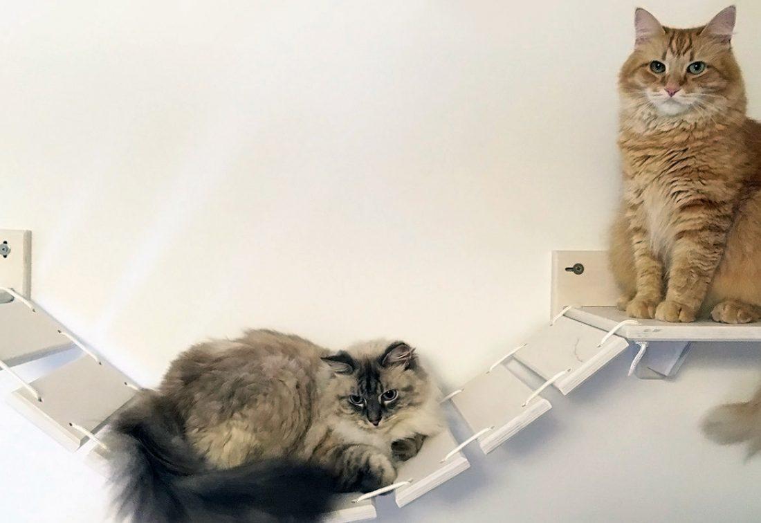 Arredamento e design arredamento design for Arredamento per gatti