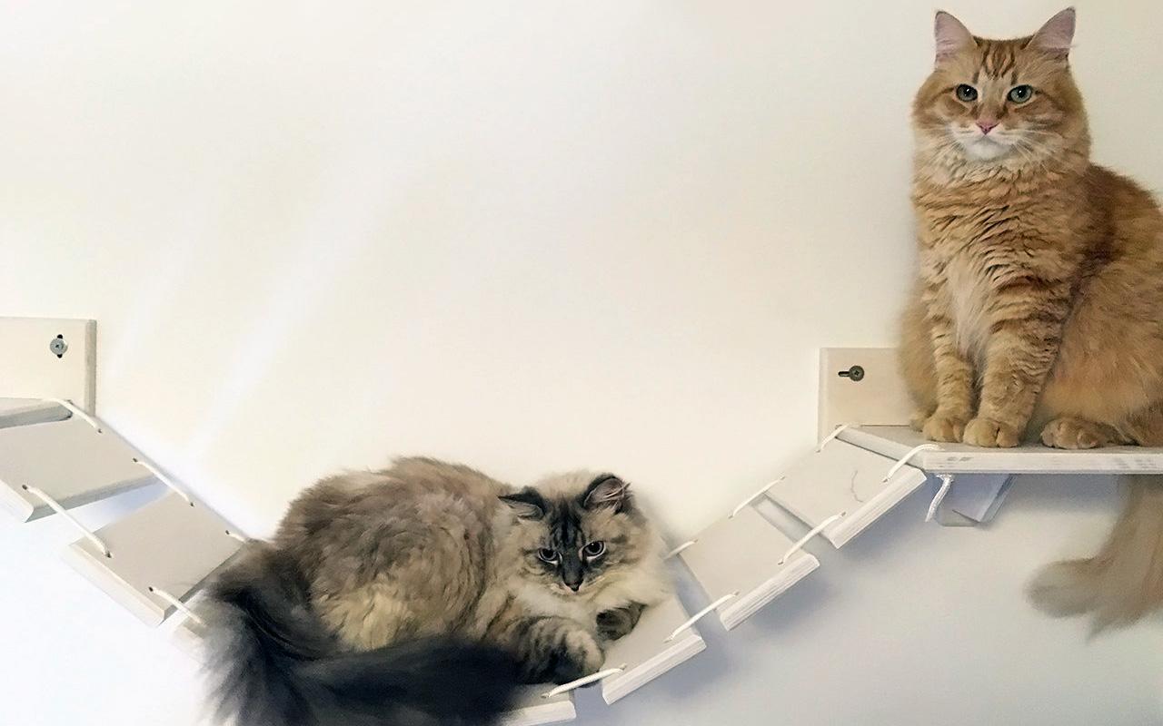 Mobili Per Gatti Fai Da Te : Condividere i propri spazi con i nostri amici gatti soluzioni